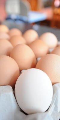 Sortiranje i pakiranje jaja