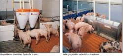 Smještaj i sistem hranjenja za odojke u uzgajalištu